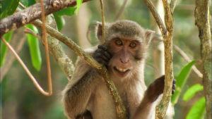 Thaimaan sademetsät. Pohjois-Thaimaassa on vielä muutamia sademetsiä, joissa on uskomattoman rikas kasvillisuus ja runsaasti eri eläinlajeja.