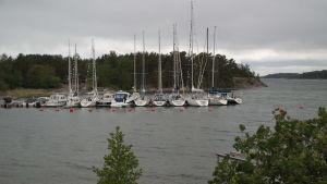 Båtar ligger vid gästhamnsbryggan på Gullkrona, mest segelbåtar