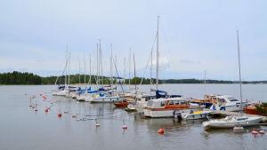En hamn med segelbåtar fastspända i bryggan