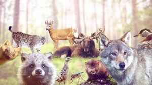 Eläimiä, joilla on karmiva ääni