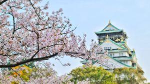 Etualalla kukkiva kirsikkapuu, taustalla historiallinen Osakan linna.