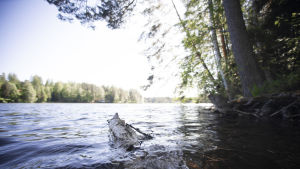 En trädbit sticker upp ur en sjö. Det är en solig dag, vågorna är blå. Man kan se en bit av trädet under vattenytan.