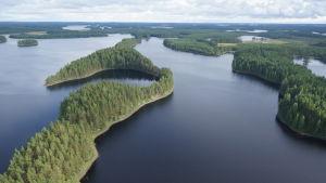 Kopterikuvaa Pelketjärven kansallispuiston maisemasta, vesistöä ja puiden peittämiä saaria.