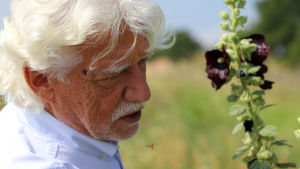 Klaus Mandery på spaning efter insekter