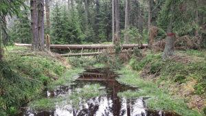 En bäck går genom en skog. Ett träd har fallit över bäcken.