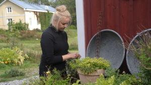 Ellen Järvinen plockar örter i sin odling