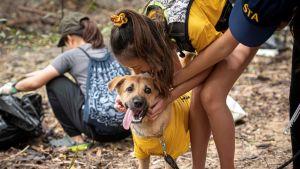En flicka gosar med en hund.