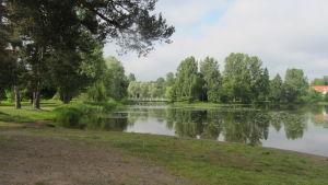 Träd och gräs intill vattendrag en vacker sommardag.