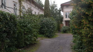 En lummig trähusgård i centrum av Åbo