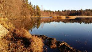Träd speglas i Littois träsk vatten en solig höstdag.