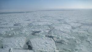 Tätt med isflak på hav. I horisonten skymtar öppet vatten.