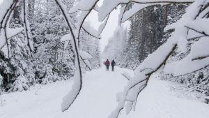 Kaksi ihmistä kulkee metsän keskellä lumista maantietä pitkin