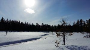 Solen lyser över ett snöklätt landskap med en myr, en bäck och skog.