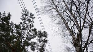 Elkabel som går genom luften, träd nära