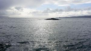 Havet breder ut sig vid Skottlands västkust.