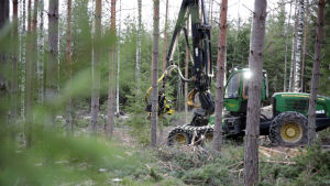 Metsätyökone metsässä
