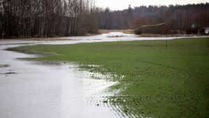 Joki on tulvinut pellolle