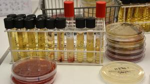 Kuvassa laboratorion näyteputkia ja -astioita