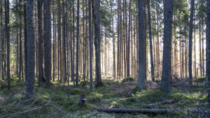 Greenpeace / metsähakkuut / avohakkuu/ Kirkkonummi 27.02.2020