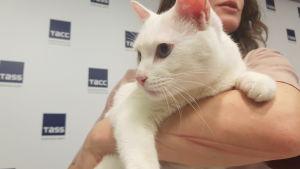 En vit katt i en kvinnas famn.
