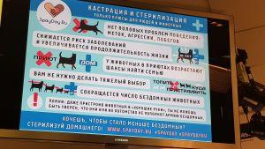 En skylt med ryskspråkig text om en kastreringskampanj för husdjur.