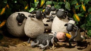 Late Lammas ja kaverit