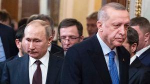Två män bredvid varandra. De är kostymklädda och ser inte in i kameran. Männen är Vladimir Putin och Recep Tayyip Erdogan.