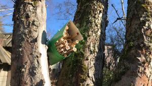 Ett insekthotell byggt av strån och en mjälkburk uppe i ett träd.
