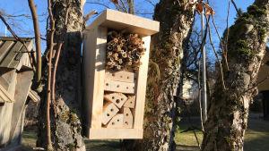 Kuvassa puusta ja korsista tehty hyönteishotelli puussa.