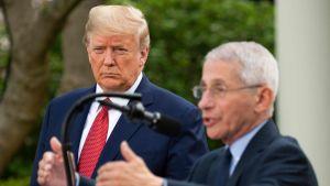President Trump lyssnar på Chefen för USA:s institut för infektionssjukdomar,  och regeringens coronaexpert Anthony Fauci (i förgrunden) under presskonferensen i rosenträdgården.