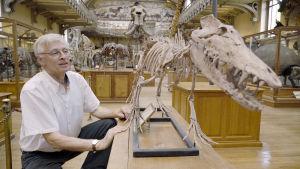 Miten luonnonhistorian myyttiset eläimet kehittyivät?