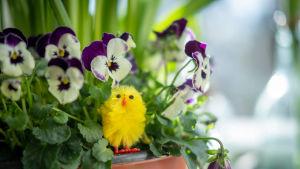 Närbild på blomsterarrangemang inklusive en gul påskkyckling.