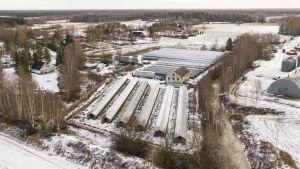 Flygbild av en pälsfarm. Skugghus i en snöig landsbygdsmiljö.