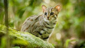 Avaran luonnon kaksiosainen dokumenttisarja isoista ja pienistä kissaeläimistä.