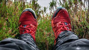 Ett par fötter i röda skor mellan ljungris.