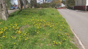 Oklippta grönområden mitt i staden blir oaser för pollinerarna.