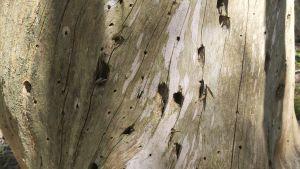 Stubbe med flera hål för insekter.