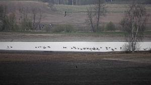 Lohjan Hyvelänjärvi