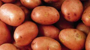 Pestyjä perunoita lähikuvassa