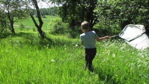 En pojke springer med fjärilshåv genom en sommaräng.