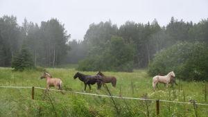 Hästar på en äng