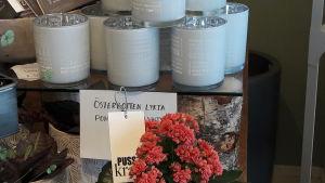 En blomma och lyktor i en blomsteraffär i Nykarleby.
