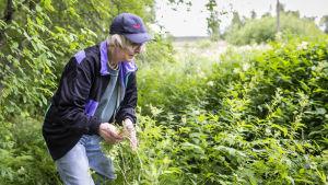 Heli Hakola kitkee jättipalsamia. Taustalla on rehevää kasvustoa ja Helillä on kädessään jättipalsamin taimia.