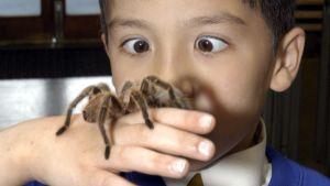Pieni poika ihmettelee kädessään olevaa isoa hämähäkkiä.