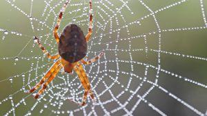 hämähäkki seitissä