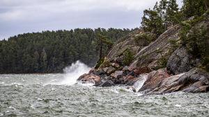 Det skummar om vågar som under en storm slår mot röda klippor i skärgården. Längst ut på klippan står en ensam tall.