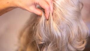 Parturi-kampaaja Minna Budde asettelee asiakkaan hiuksia.