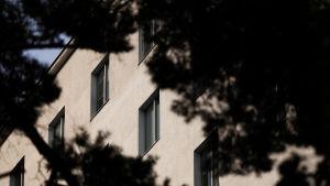 Tilkan sairaalan seinää, edustalla oksia