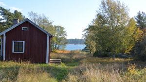 En röd stuga i skärgården på hösten, vattnet syns mellan träden.