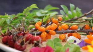 Havtorn, nypon och färska blommor på ett fat i ett kök